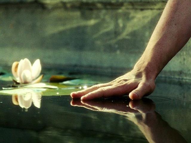 Отражение цветка (о смысле жизни)